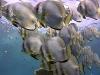 fishy500